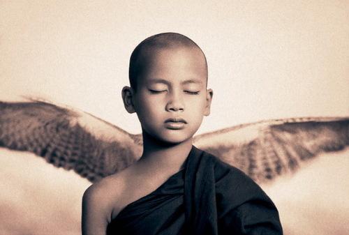 Buddha bird from Zen no wing just Go